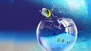 3D poisson aquarium 1080p