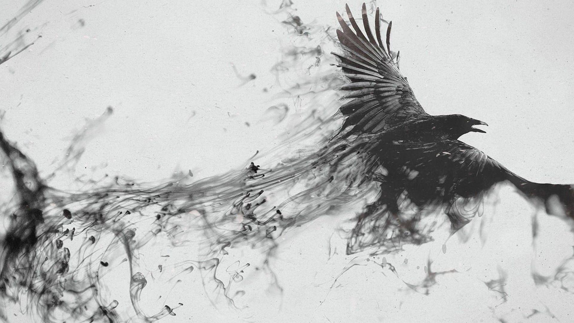 corbeau wallpaper dessin