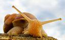 Escargot photo 1920x1200
