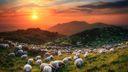 Paysage moutons 1920x1080