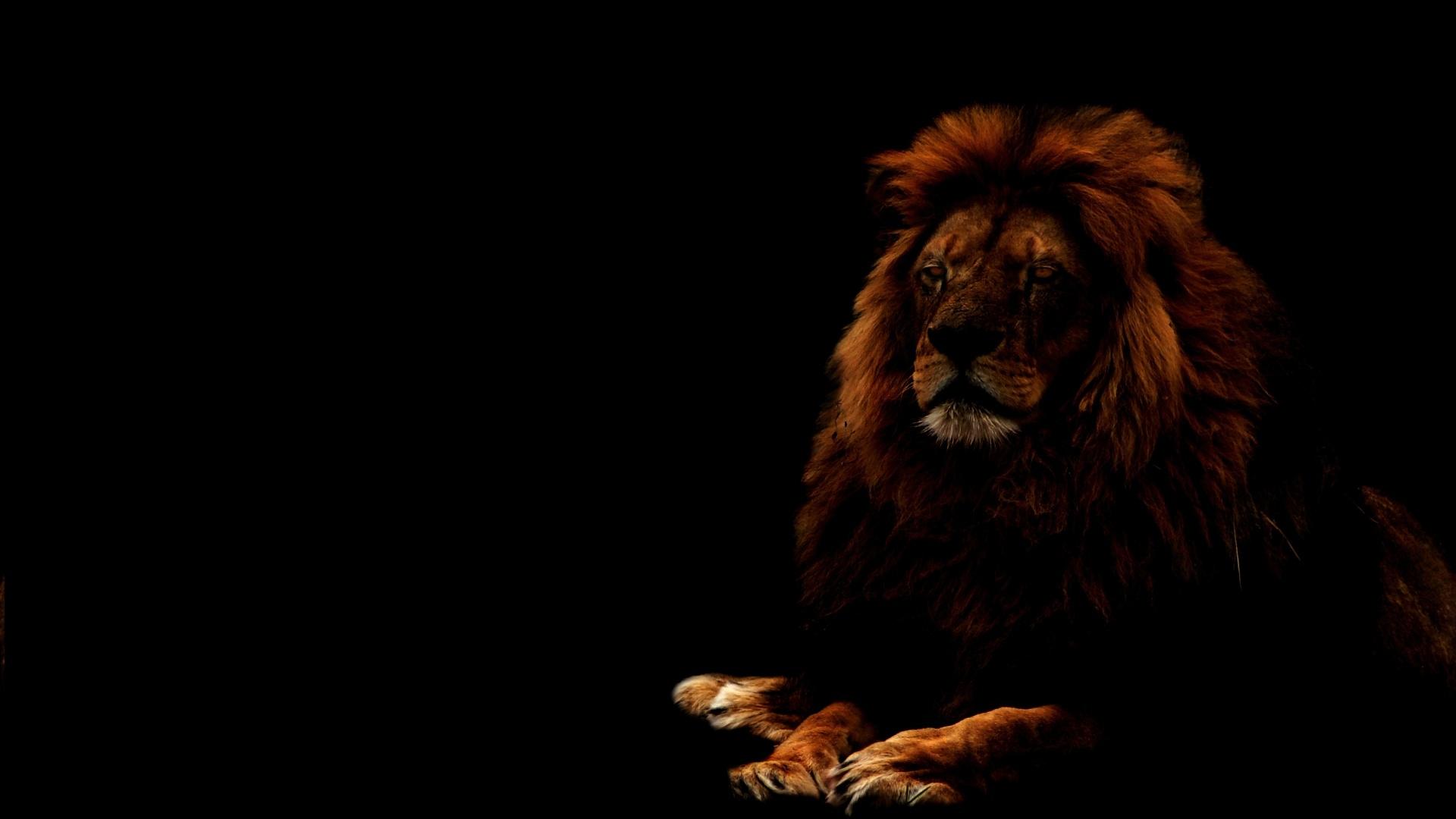Lion fond ecran rj03 jornalagora for Fond ecran 3d