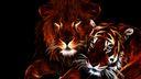 Lion et Tigre fond ecran HD