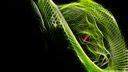 Serpent Vert 3D -1920x1080