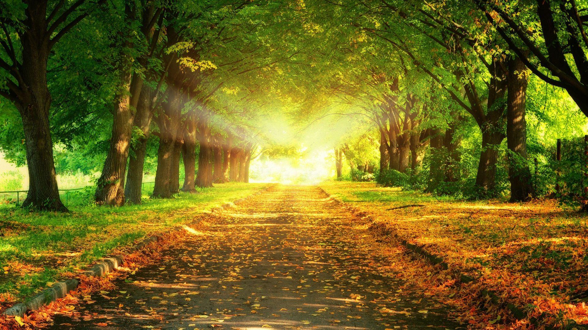 Chemin en automne 1920x1080 - 10 000 Fonds d'écran HD gratuits et de qualité ! Wallpapers HD