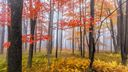 Brume dans la forêt - Photographie