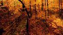 Forêt jaune HD