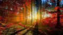 La forêt rouge magnifique fond d'écran
