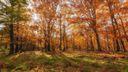 Magnifique clairière en automne