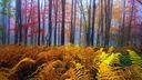Superbes couleurs d'automne