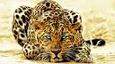 Leopard artistique - fond ecran
