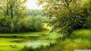 Scene de nature peinture