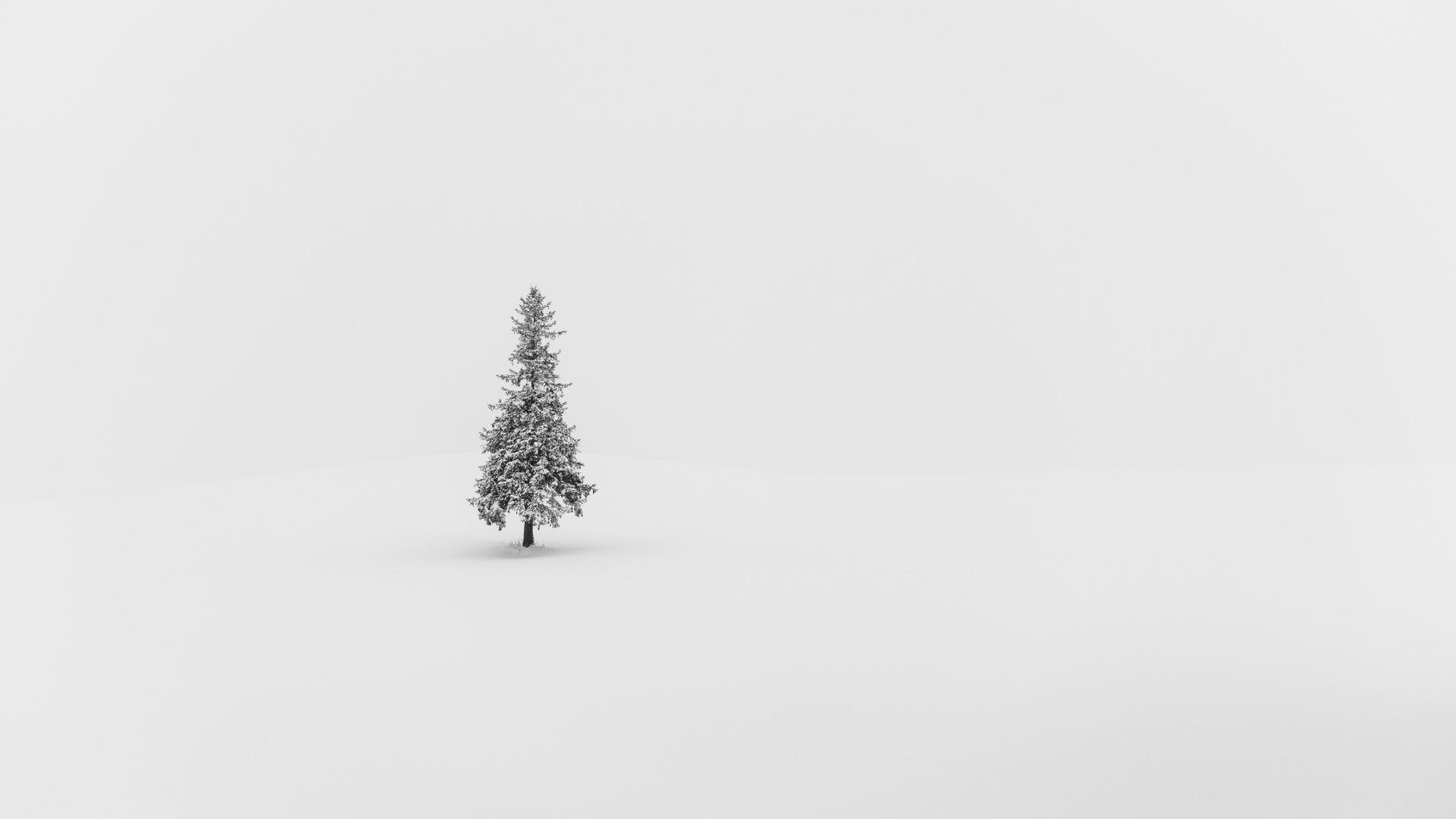 Noel_arbre_seul_dans_la_neige.jpg