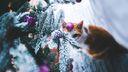 Chat sous l'arbre de noël