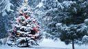 Spain de Noël dans la forêt