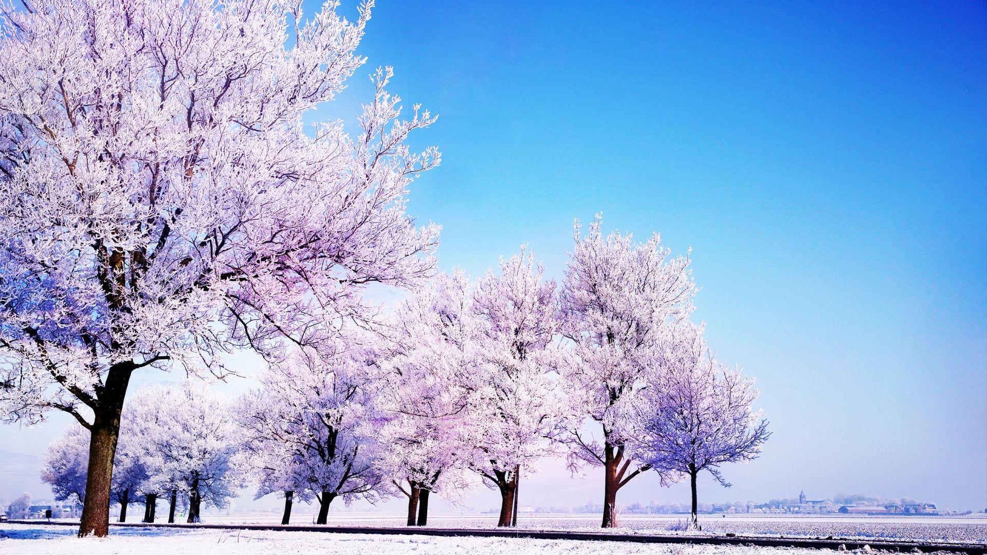 Arbre_en_blanc_-_saison_hiver.jpg