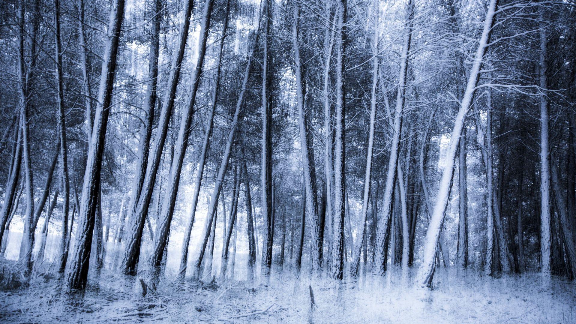 Un eternel hiver fond ecran 10 000 fonds d 39 cran hd for Fond ecran gratuit hiver