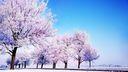 Arbres en blanc - saison Hiver