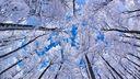 En haut des arbres en hiver