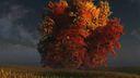 Arbre automnee 3D 1920x1080