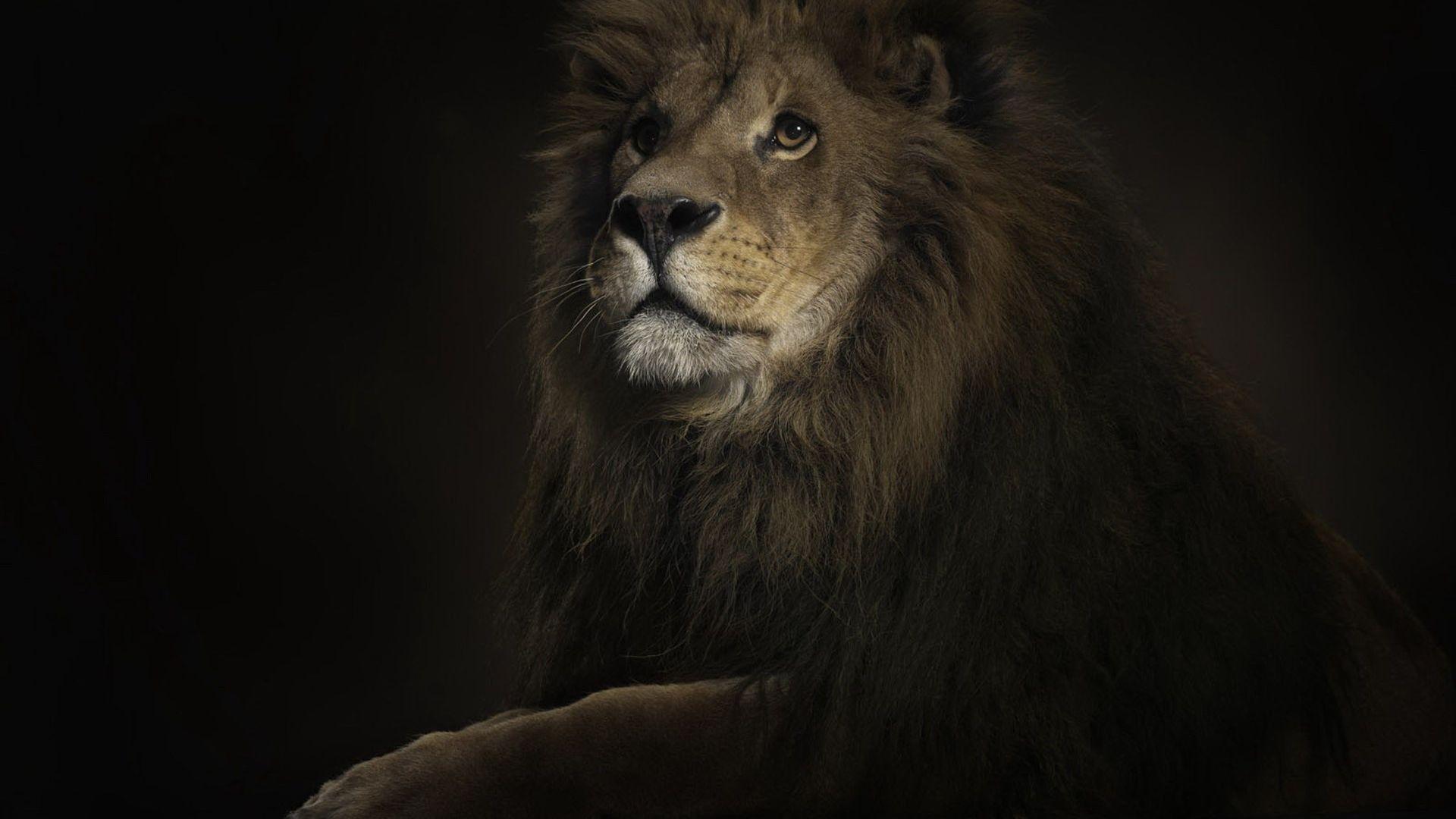 Fabuleux Roi lion fond ecran Noir - 10 000 Fonds d'écran HD gratuits et de  FL57