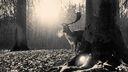 Cerf en hiver - fond ecran noir et blanc