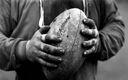 Rugby fond ecran