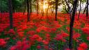 Le plus beau coucher de soleil -1920x1080